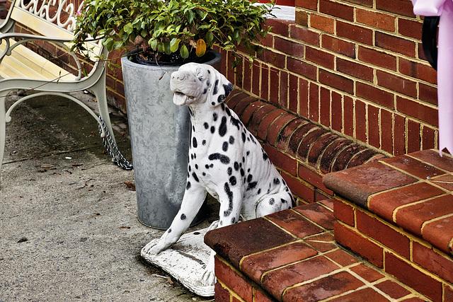 The Bath House Dalmatian – Fairfax Street, Berkeley Springs, West Virginia