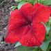 Flor roja texturada