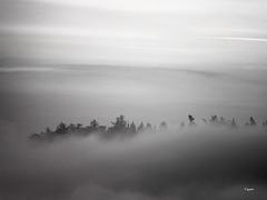 Steigende Nebel