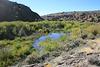 Beaver pond & dam