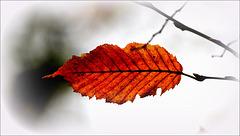 Bisou d'automne
