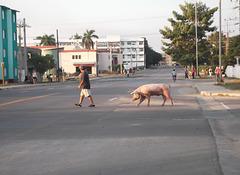 Un homme et son cochon ou un cochon et son homme....
