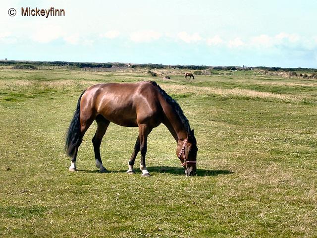 colour wheel week 8 brown pony