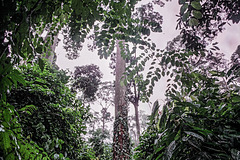 Sepilok jungle