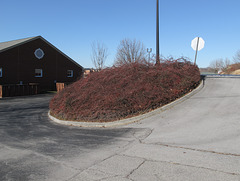 A disc of reddish landscaping for an embankment.