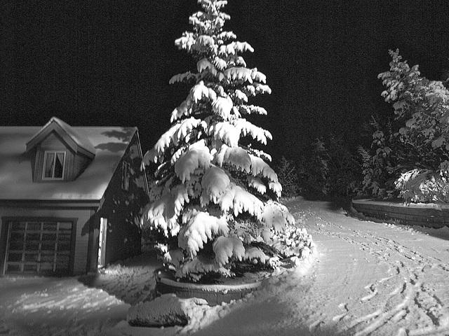 Lots of snow today. Nov 26