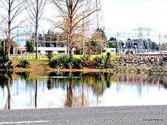 Reflections in Lake Whakamaru