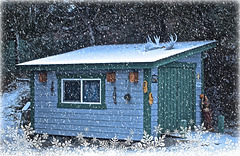 Our garden shed.