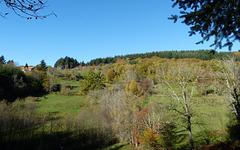 Ma maison (pas bleue !) adossée à la colline et Voxane dans le pré (voir note)