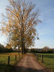 Herbstbäume am Feldweg