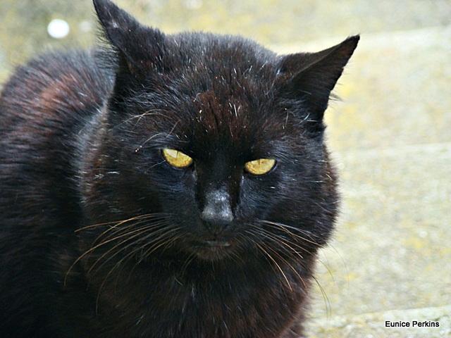 My Blackie