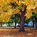 Fall Tree, 1993