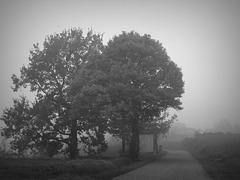 Langa cebana nella nebbia