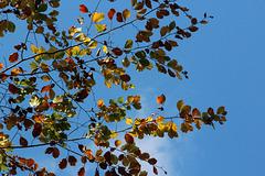Keine Blätter im Herbst