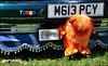 1995 VW Polo L - M613 PCY