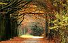 Autumn Scenery...