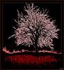 Tapis rouge pour ce cerisier