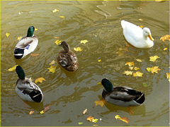 Ronde d'automne, ou histoire d'O ;o))