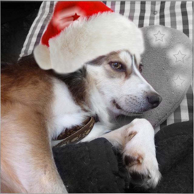 Mein Weihnachtstier ☆