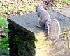 Grey squirrel (1 of 3).