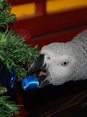 Par restriction budgétaire , c'est Jaco qui est chargé d'installer les décos de Noël , aucune revendication si il est payé des cacahuètes . La guenon Cheeta accepte aussi de se faire rétribuer en monnaie de singe .