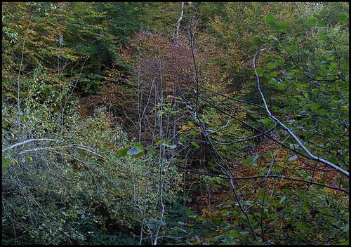 Forêt de ravin en automne