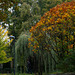 Herbstwalk