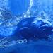 Sealife (98)