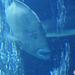 Sealife (102)