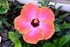 Hortus Botanicus 2014 – Flower