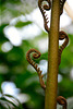 Hortus Botanicus 2014 – Caterpillars
