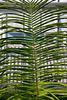 Hortus Botanicus 2014 – Leaves