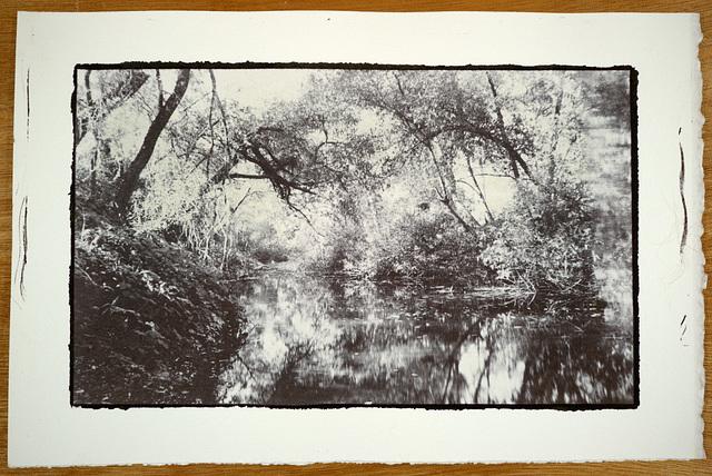 Santa Rosa Creek Salt Print