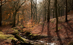 An Autumn in Tandle Hills