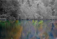 Autumn reflection X-Pro1 60mm 2 selective