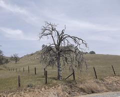 Cross fences tree