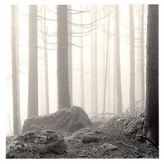 im-Wald-#3
