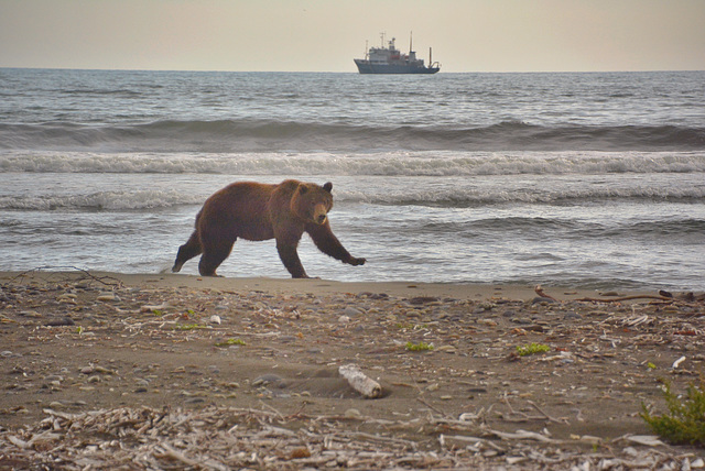 Bear and boat