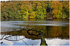 Herbst am See / Autum at the lake