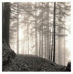 im-Wald-#1