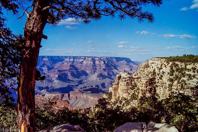 South Rim Vista, Grand Canyon