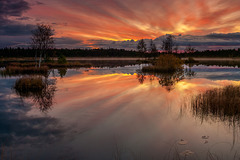 Lac Läänemaa à l'aurore