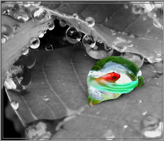 A really rainy summer. ©UdoSm