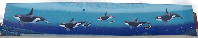 "Orca Mural ""Family"" (1)"
