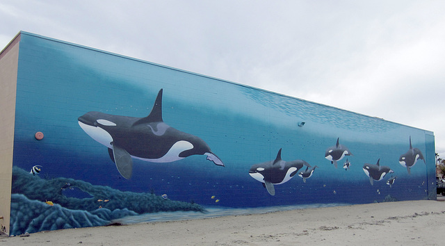 "Orca Mural ""Family"" (2524)"