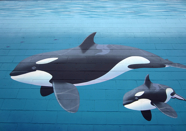 "Orca Mural ""Family"" (2525)"