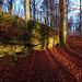 Sanspareil: lange Schatten im Felsengarten - Long Shadows in the Rock Garden