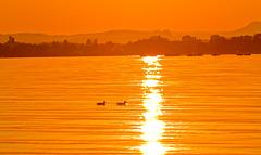 Evening Sun Specials