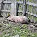 Siesta und allen einen Happy Fence Friday