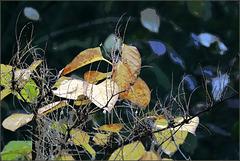 Impressions d'automne